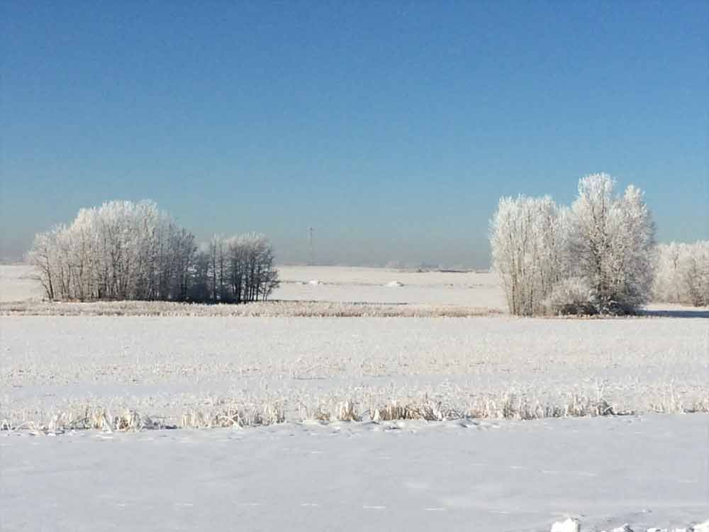 Image of Frosted Landscape for Purchase